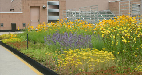 Ecological Garden Design_GREEN ROOFS_Extensive_Central YMCA