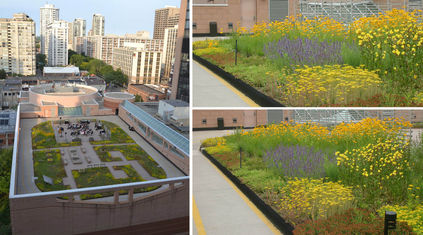 GREEN ROOFS_Extensive (Central YMCA)